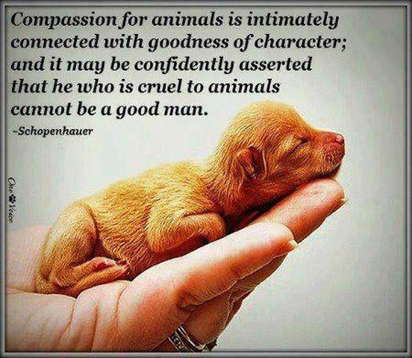 Compassion....................