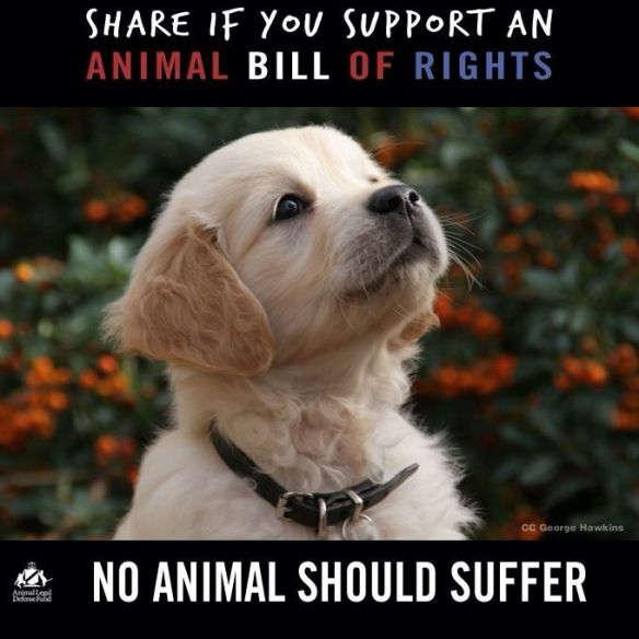 NO ANIMAL SHOULD SUFFER